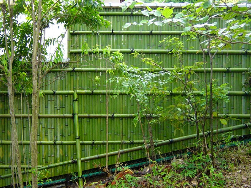 Take to take bamboo yokoyama bamboo products co for Natural privacy fence